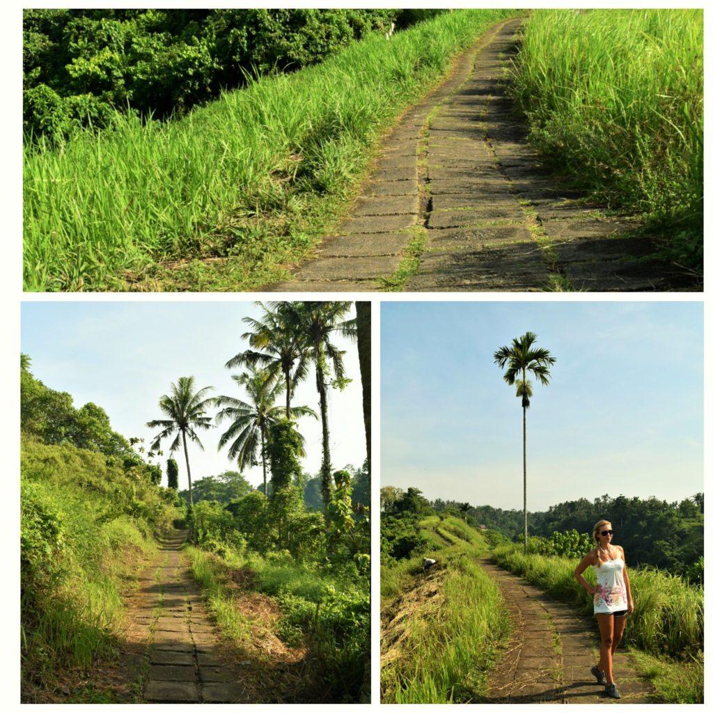 campuhan-ridge-walk-1