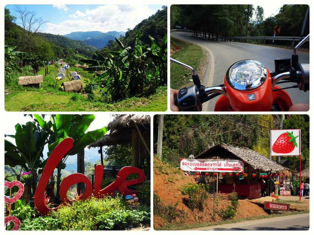 enjoying panoramic views and strawberries on our scooter ride to Mon Cham from Chiang Mai