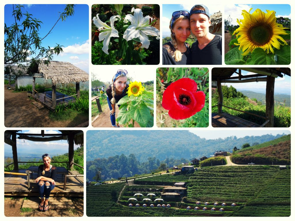 overview of Mon Cham enjoying the flower garden, panoramic views and strawberrry fields