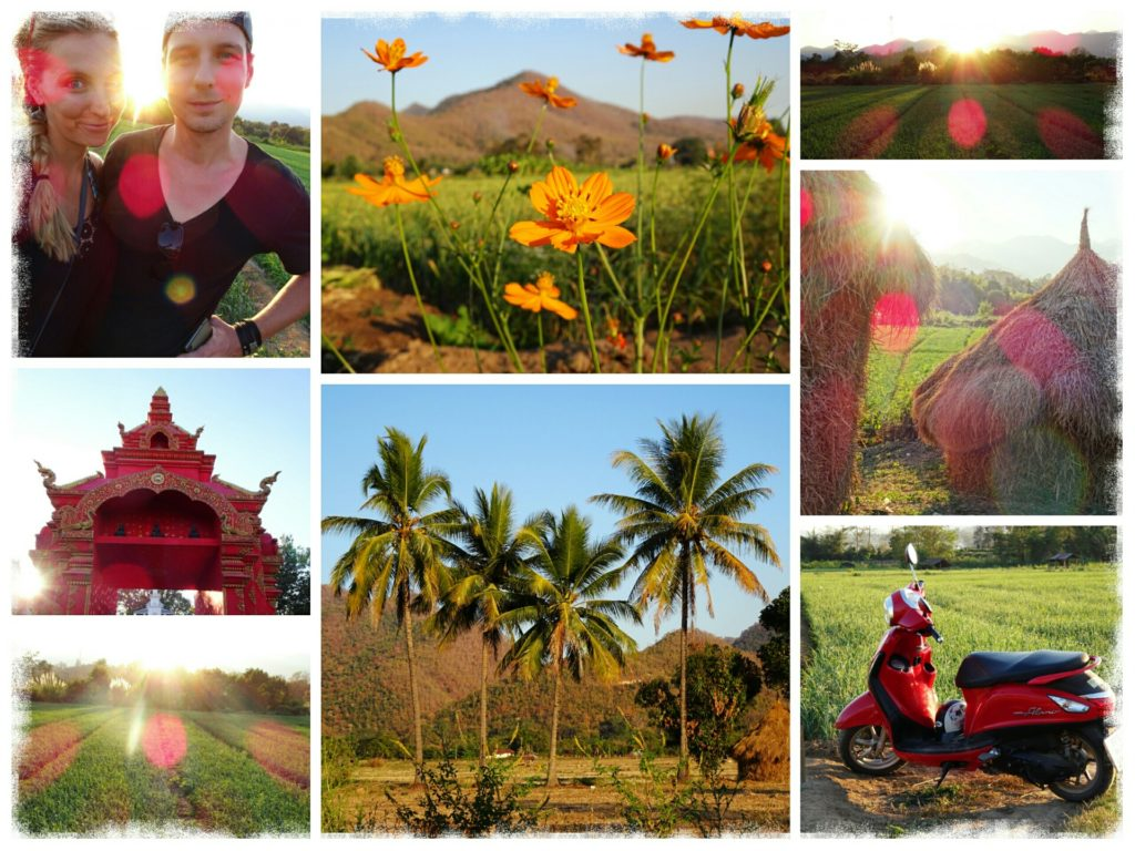 things to do in Pai_watching the sunset in the rice paddies in Pai Thailand