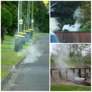 new-zealand-roadtrip-rotorua-steaming-gullies