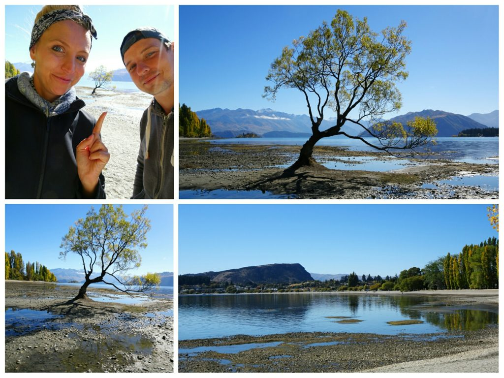 new zealand roadtrip wanaka tree collage