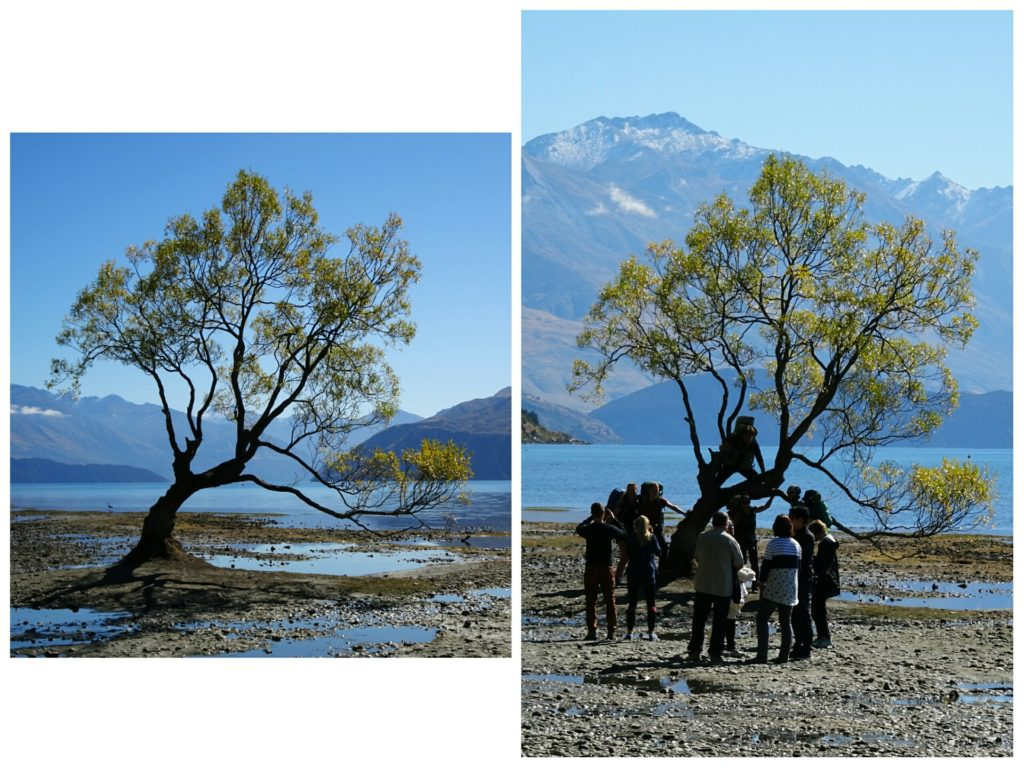 new zealand roadtrip wanaka tree crowd