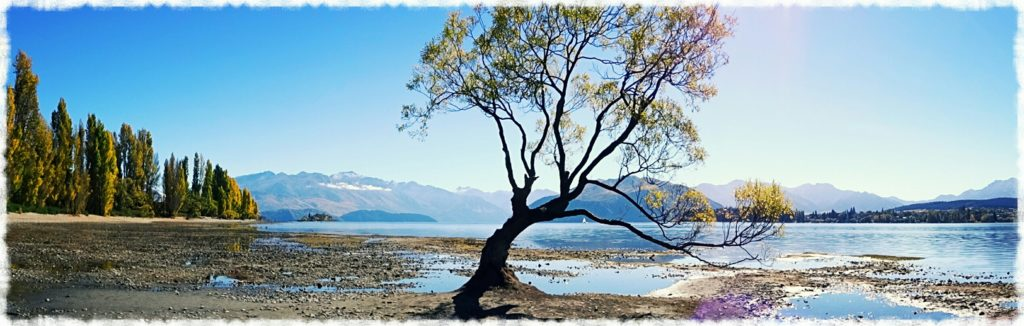 new-zealand-roadtrip-wanaka-tree-panorama