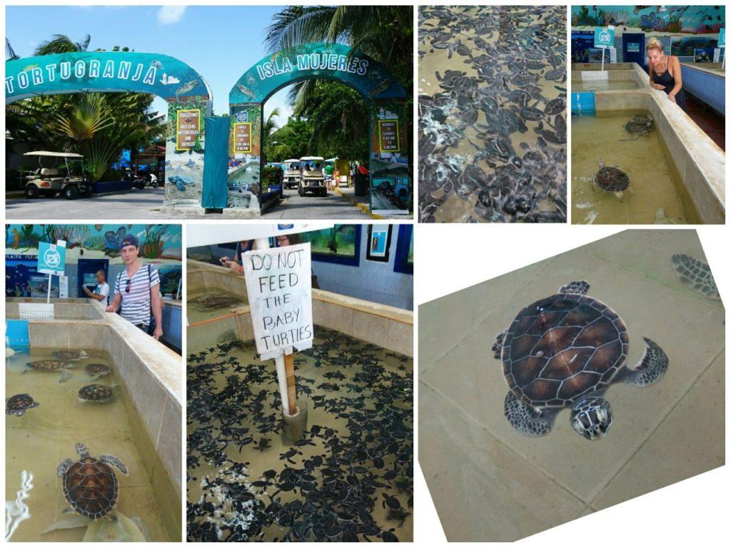 day-trip-isla-mujeres-tortugranja-turtle-sanctuary
