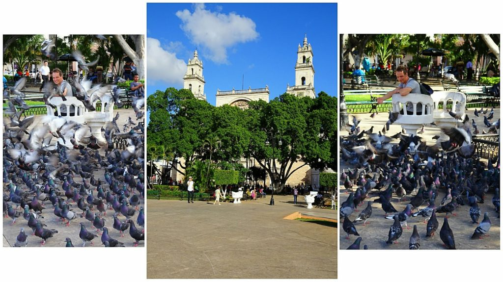 best things to do in merida plaza grande pigeons