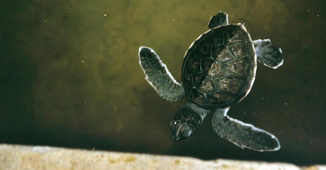 Sri lanka unawatuna turtle sanctuary