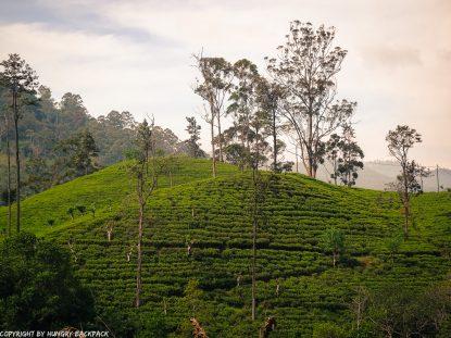 Ella hikes nine arch bridge_views tea plantations