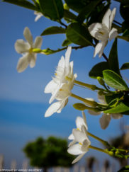 Gili Trawangan on year after earthquake_blooming flowers at beach