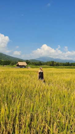 Berit walking through the ricefields at Huay Tueng Tao