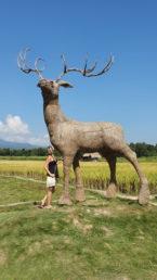 Giant reindeer sculpture at Huay Tueng Tao