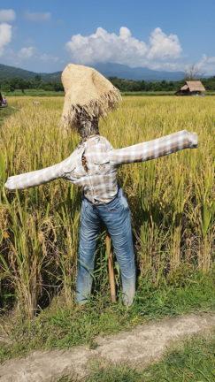 Huay Tueng Tao scarecrow at King Kong village
